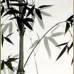 קורס ציור בדיו שחורה יפנית, אומנות בעמק
