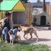 הלה באות - מאלפת כלבים ופנסיון ביתי