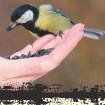 קורס טיבוע ציפורים - אורנים